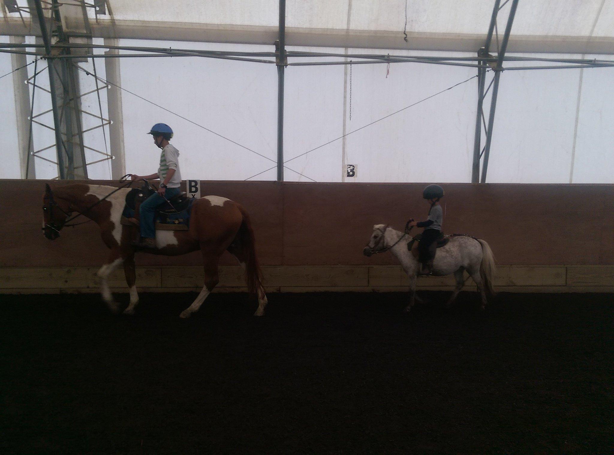 Rosebud Camp ponies and horses