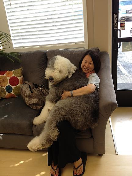 Bailey Therapy Lap Dog - Belmont - Fabulous Smiles Dental