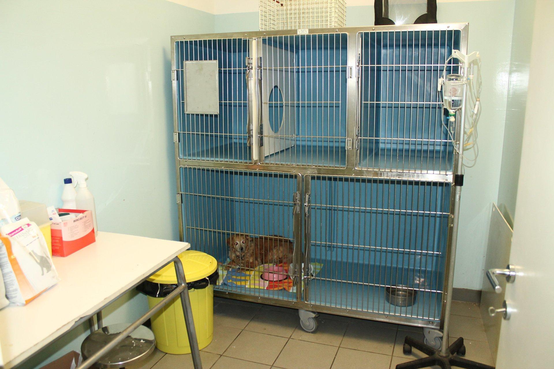 gabbie per animali