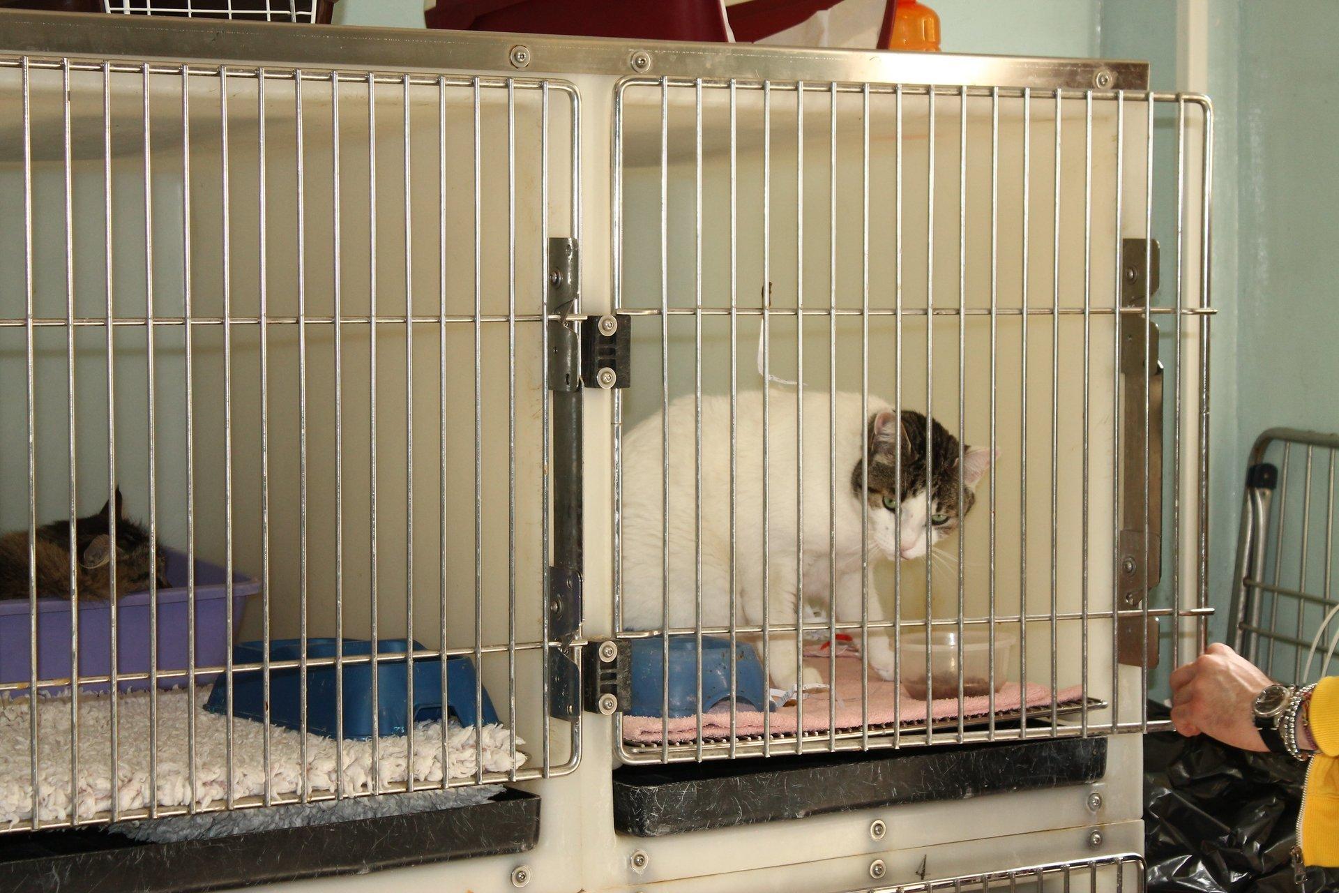dei gatti in gabbia