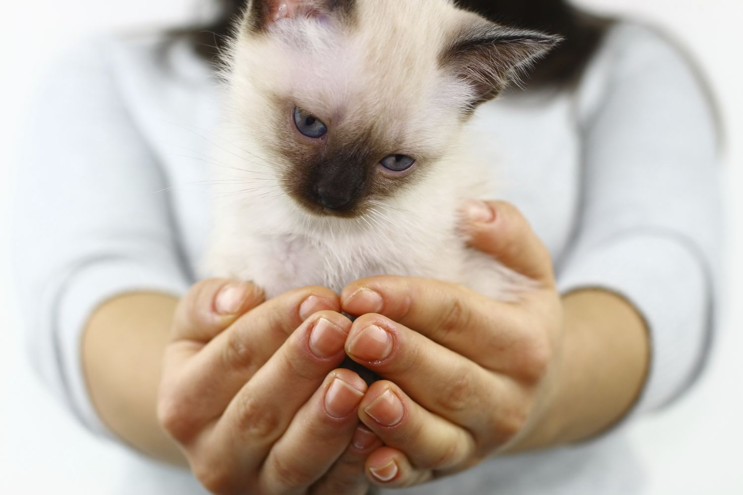 cat in good hands with our animal vaccinations in Cincinnati, OH