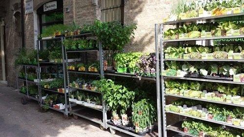 delle piante negli scaffali in ferro