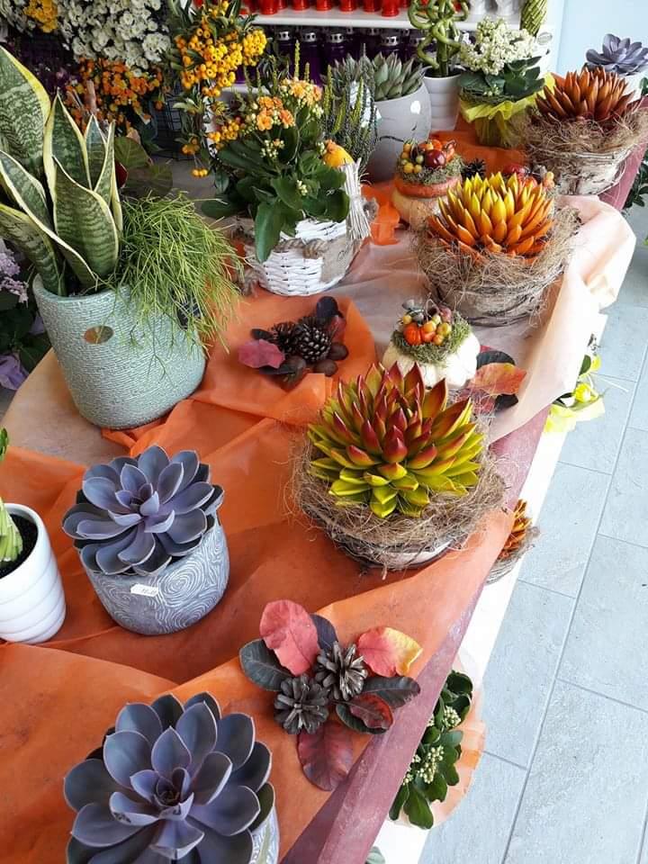 Composizioni con fiori e piante   Udine   A.R. Fiori