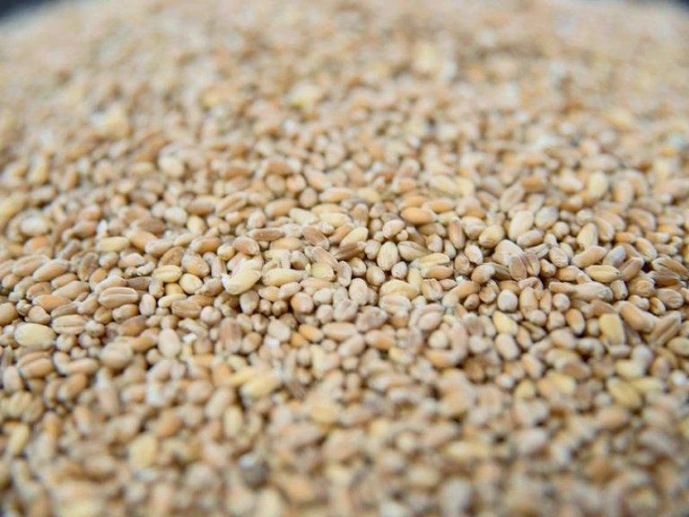 farina cereali