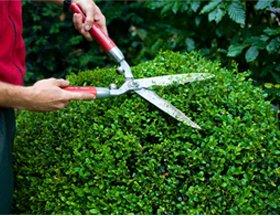 Garden maintenance - Hull - RJ Garden Services - Hedge trimming