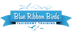 Blue Ribbon Birds DVD