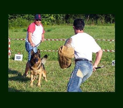 addestramento cani lupo