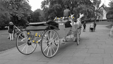 Rear view of an open top coach with yellow flowers on the axle