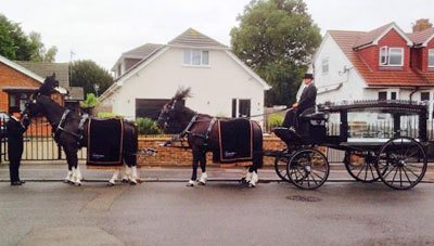 Beautiful horses and funeral carriages