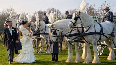 A bride and groom walking along a row of white horses