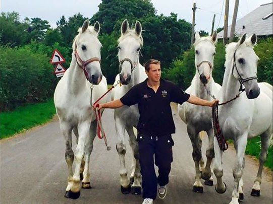 A man in black polo shirt and trousers, leading four white horses along a country road