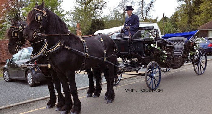 Black horses and a black funeral carriage
