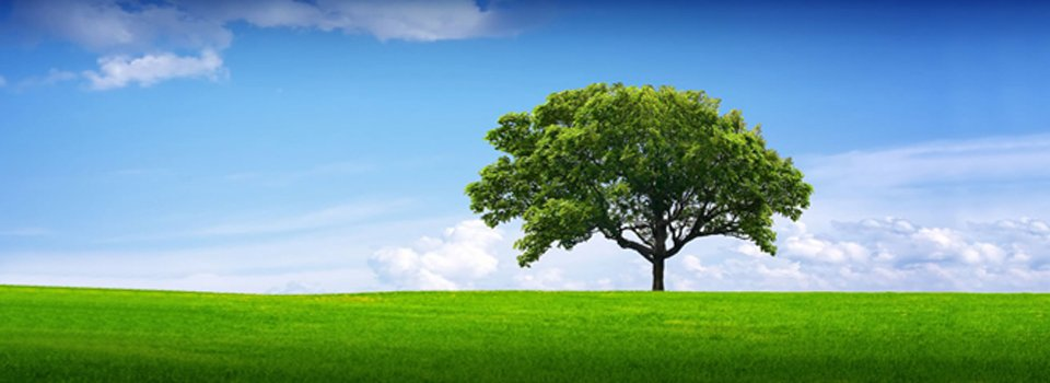 graphic of a lush green tree