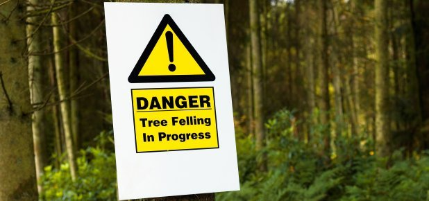 DANGER tree felling sign board
