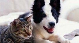 ginecologica cani e gatti