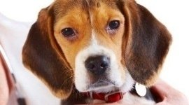 visite cardiologiche per animali