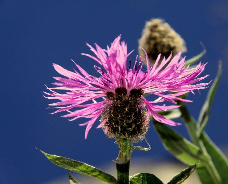 un fiore viola visto da vicino
