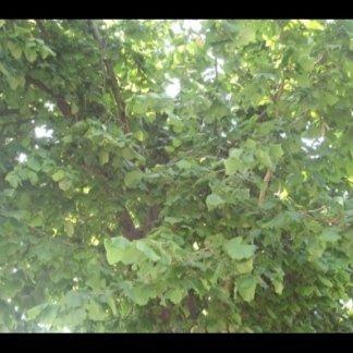 La frutta secca: nocciole e noci.