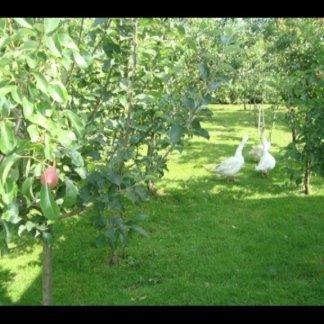 Il frutteto con meli,peri.peschi,ciliegi...