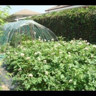 Le coltivazioni protette sotto serra
