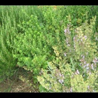 Ecco le erbe aromatiche che insaporiscono i nostri piatti: rosmarino,basilico,salvia,menta...