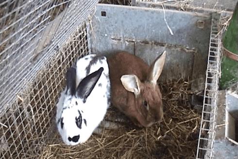 Alcuni coniglietti presenti nella struttura agrituristica.