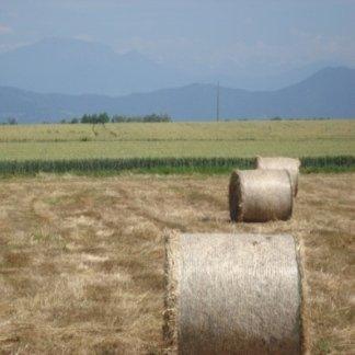 I campi della nostra azienda sono coltivati