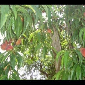 Coltiviamo piccoli frutti: more,lamponi,ribes bianco e mirtilli