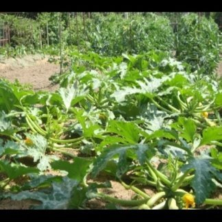 Gli orti da cui produciamo le verdure