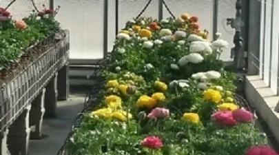 atelier del fiore