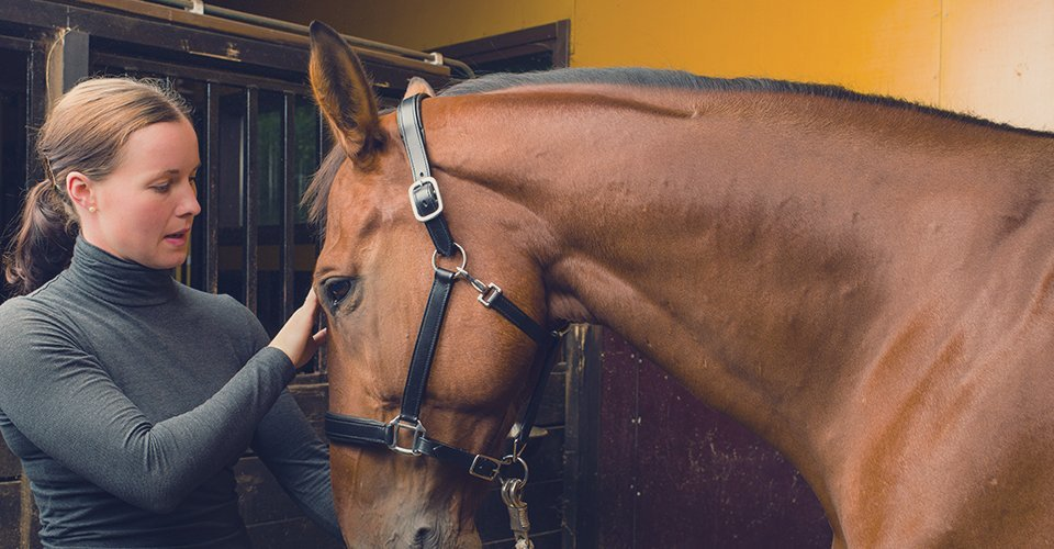 Meet Busy Equitation Centre