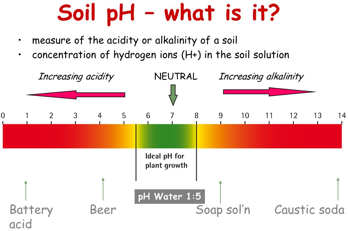 research on ph level of water Ph refers to the ability of the water to be more on the acidic side of the ph scale or on the basic side of the ph scale water, pure water, that is, has a ph of 7, which is right in the middle of the scale, from 1 to 14 the lower the number, the more acidic, the higher the number, the more basic beans, when germinating, prefer a ph level.