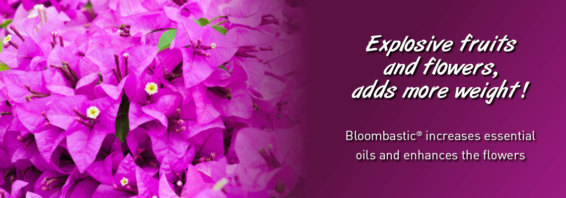 Explosive fruits and flowers, adds more weight. Bloombastic increases essential oils and enhances the flowers