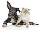 wentworth falls animal hospita dog and cat at rest