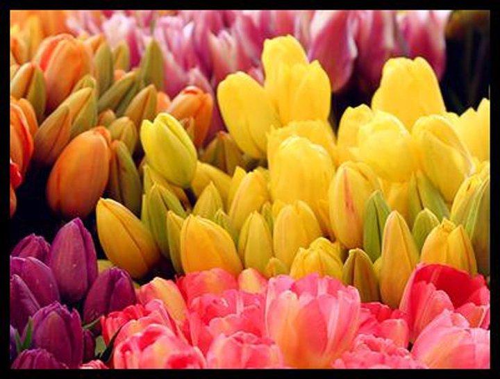 fiori colorate