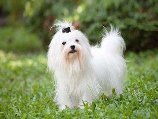 Cani con pedigree arezzo cucciolandia for Piccoli progetti di palafitte