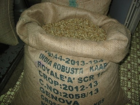 Robusta lavato India Kaapy Royale scr 17