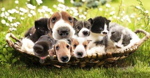 vendita cani e gatti cuccioli