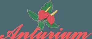 Anturium Fiori e piante