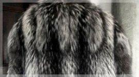 pelliccia volpe argentata