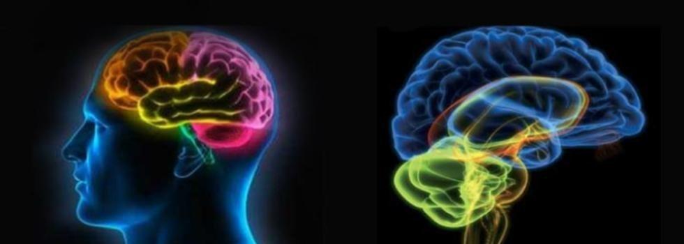 studio neurologico