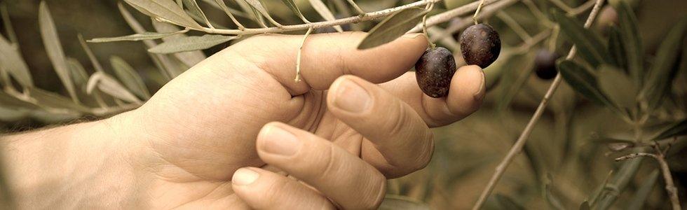 agricola collatina giardinaggio