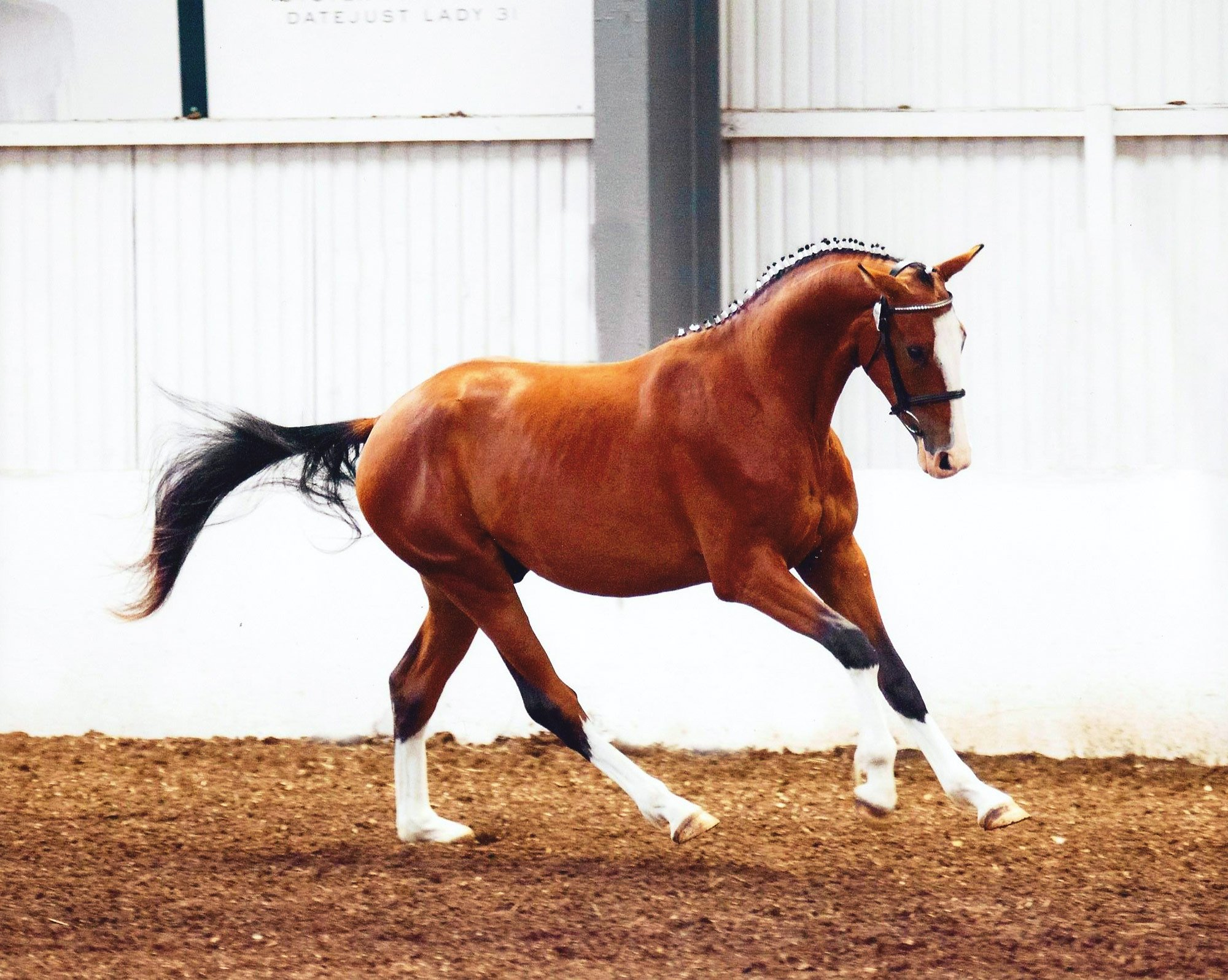A beautiful horse in one of the best stables in Cheshire