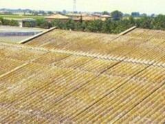 dismantling sheds