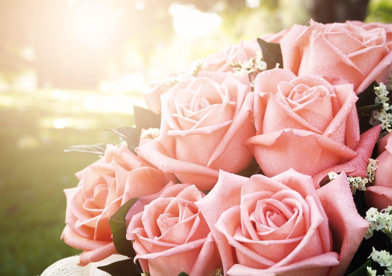 Primo piano di rose rose