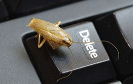 picture of a cricket on a keyboard