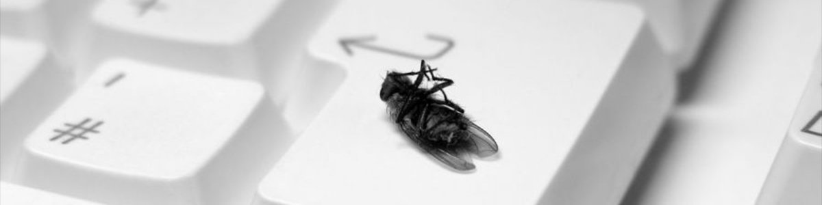 picture of a dead fly on a keyboard