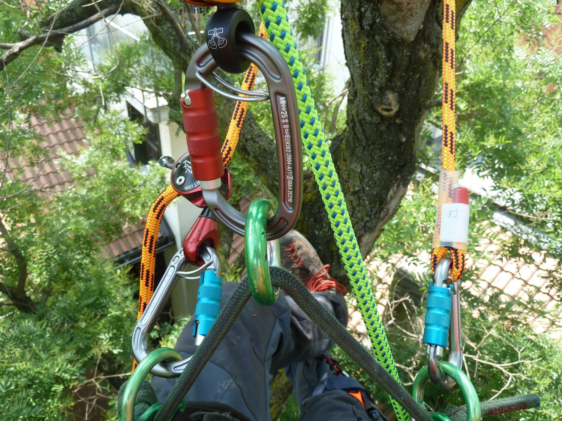 potatura albero in tree climbing