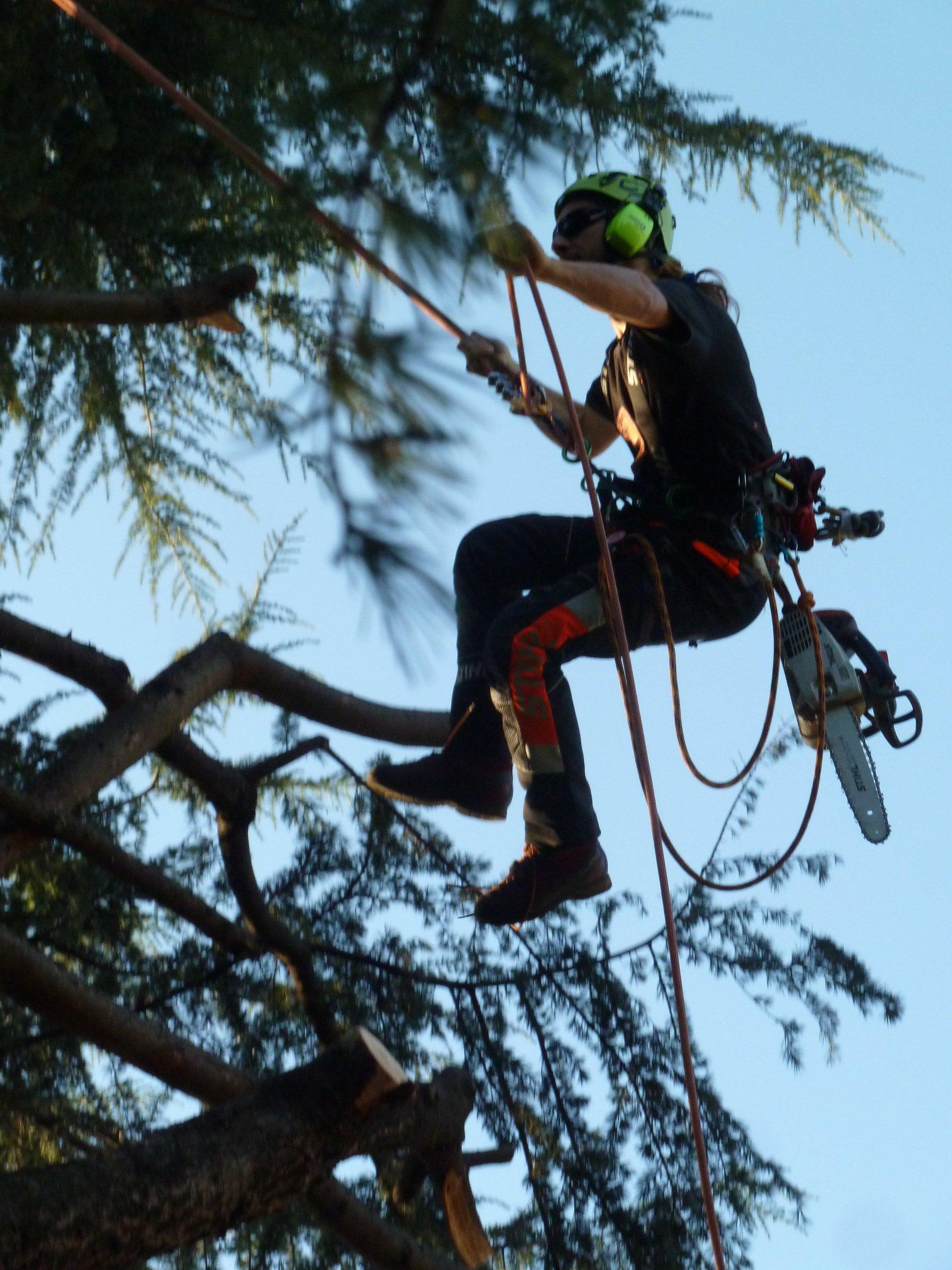 operatore in tree climibing per potatura