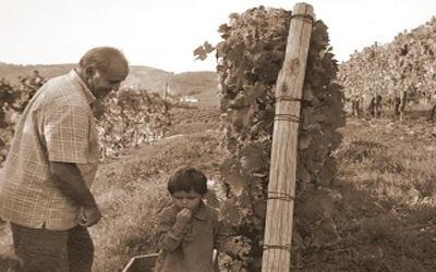 Produzione uva